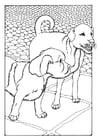 Coloriage deux chiens