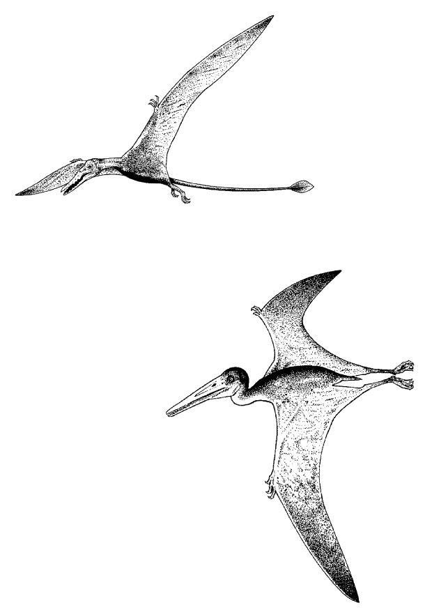 Coloriage dinosaures volants img 9107 - Dinosaur volant ...