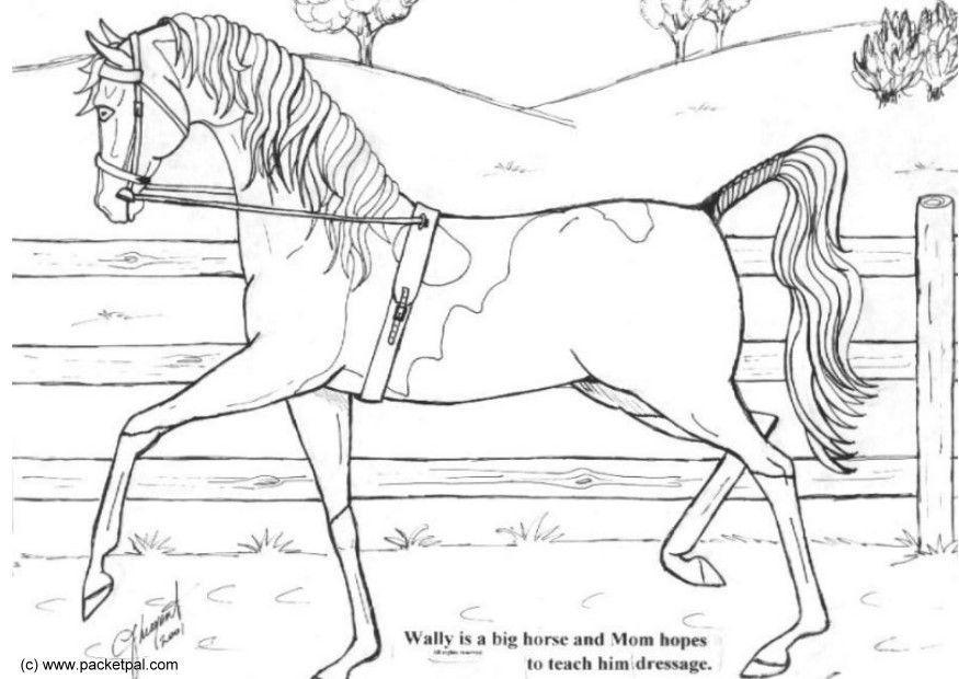 Kleurplaten Paarden Springen Coloriage Dressage