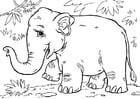 Coloriage éléphant d'Asie