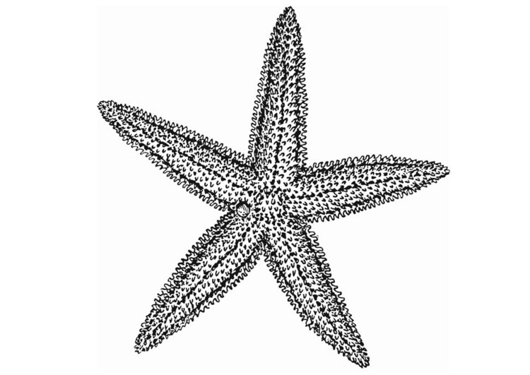 Coloriage étoile De Mer Img 13077