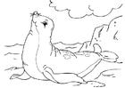 Coloriage foque
