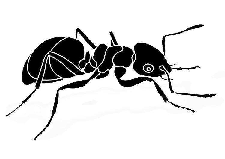 Coloriage fourmi img 19475 - Dessin de fourmi ...