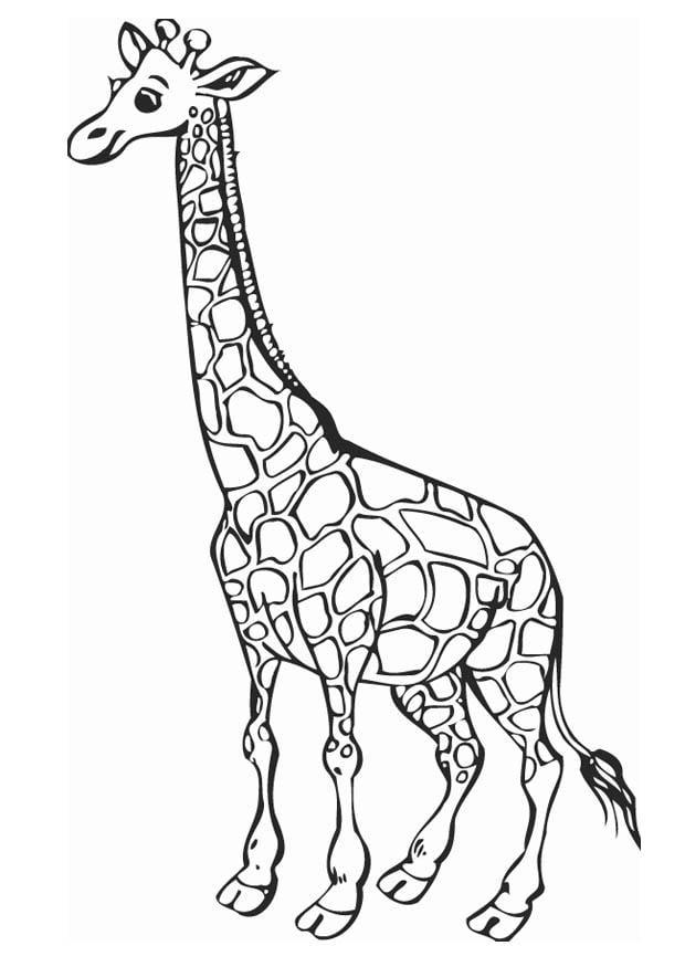 Coloriage girafe img 12758