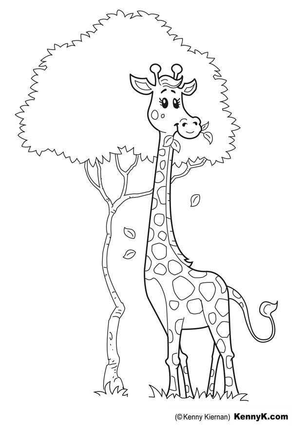 Coloriage girafe img 20049 - Coloriage de girafe ...