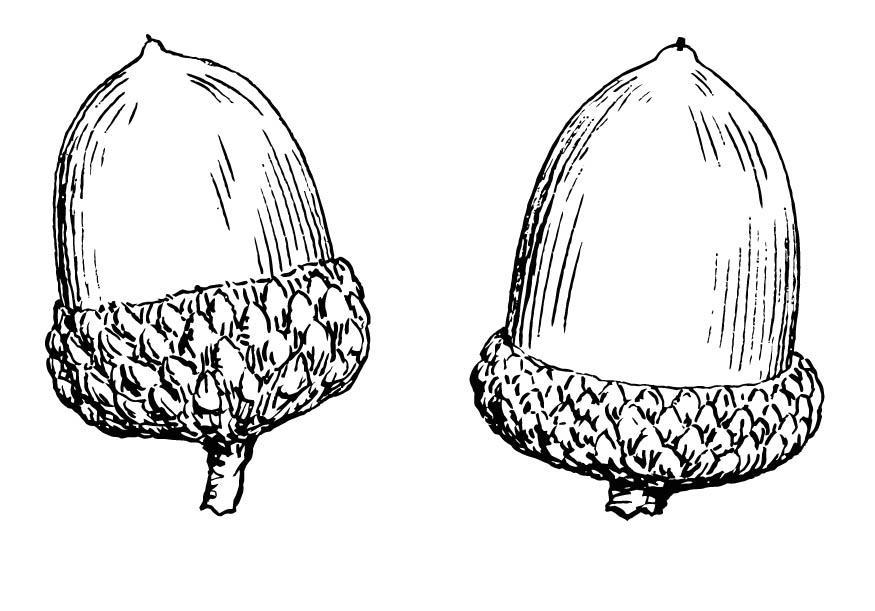 coloriage gland  img 15694