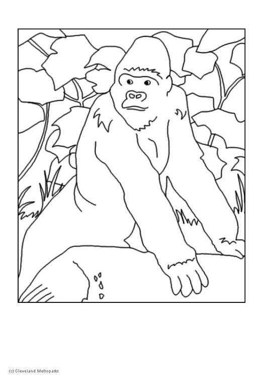 Coloriage gorille img 5729 - Gorille coloriage ...