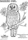 Coloriage hibou strié