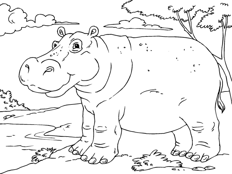 Coloriage Hippopotame Img 23011 Images