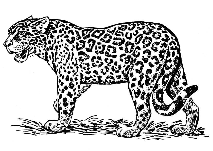 coloriage jaguar