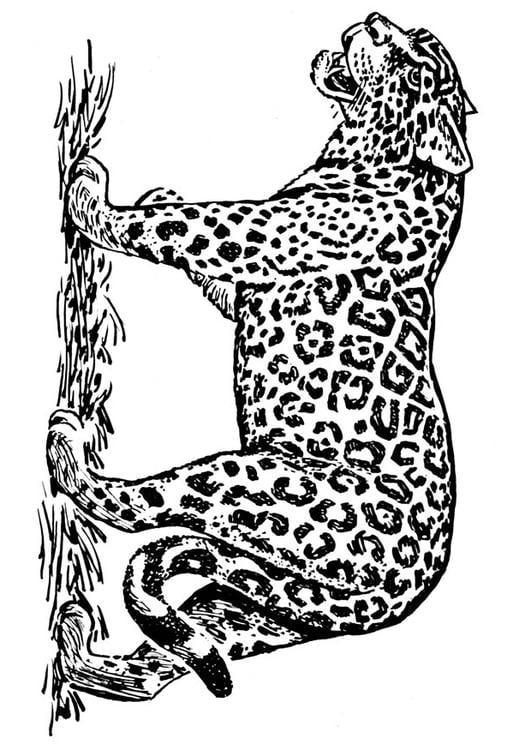 Coloriage jaguar img 16636 - Jaguar dessin ...