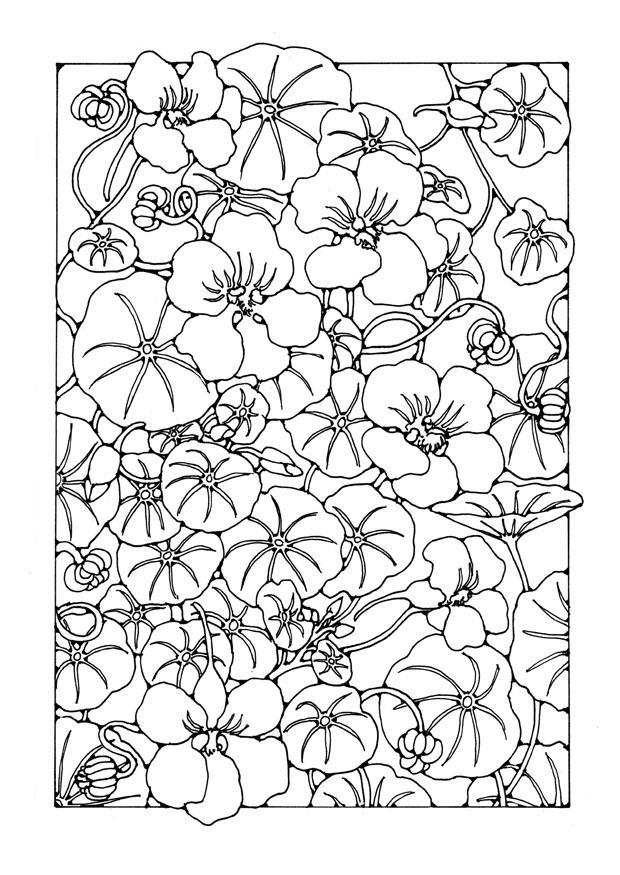 Coloriage jardin de fleurs de capucine img 27759 - Coloriage fleur capucine ...
