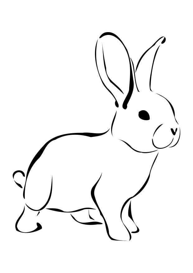 rabbit كرتون