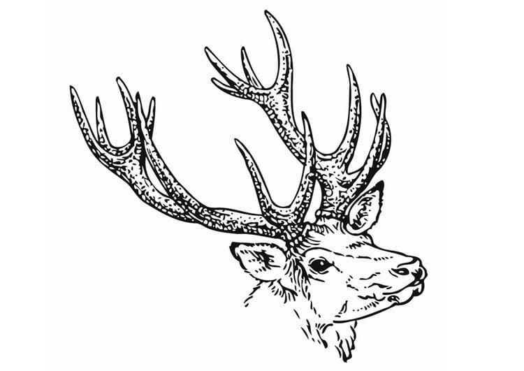 Coloriage le cerf img 12904 - Dessin bois de cerf ...