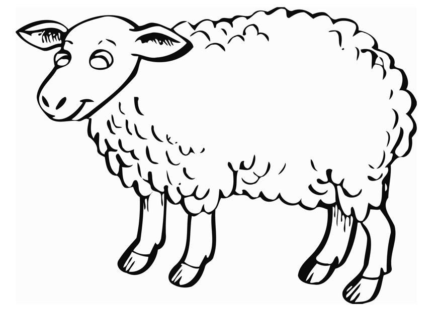 Coloriage le mouton img 12840 - Brebis dessin ...
