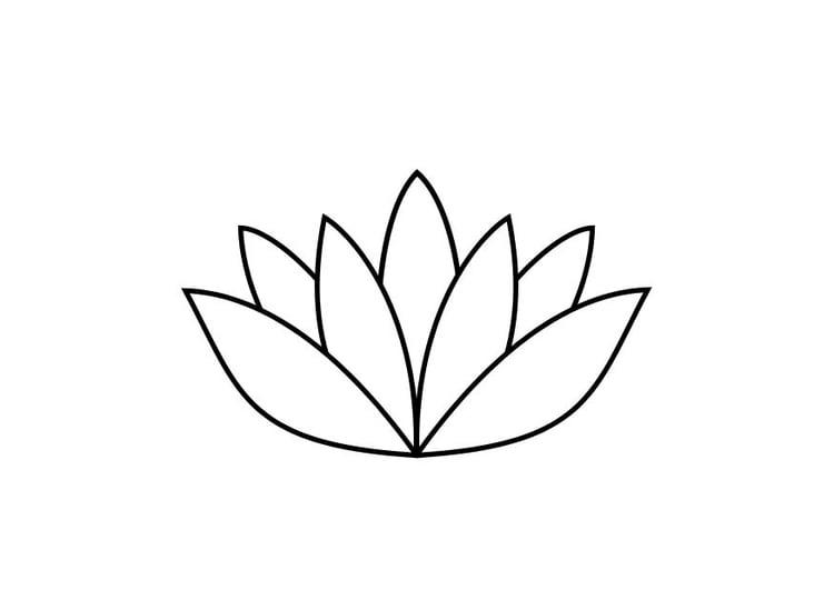 Coloriage Fleur De Nenuphar.Coloriage Le Nenuphar Img 10467 Images