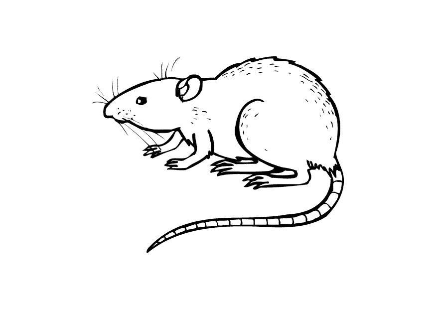 Coloriage le rat img 10437 - Dessin d un rat ...