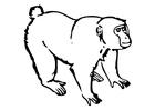 Coloriage le singe