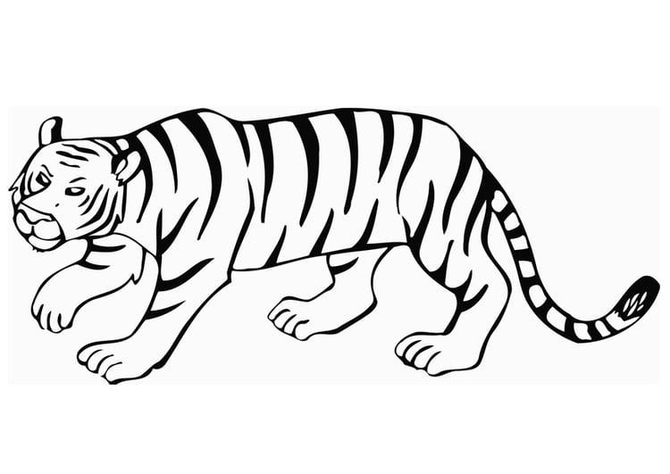 Coloriage le tigre img 12849 - Coloriage tigre ...