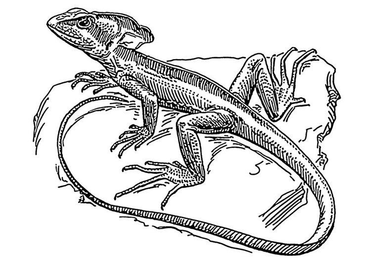 Coloriage l zard basilisc img 18908 images - Coloriage lezard ...