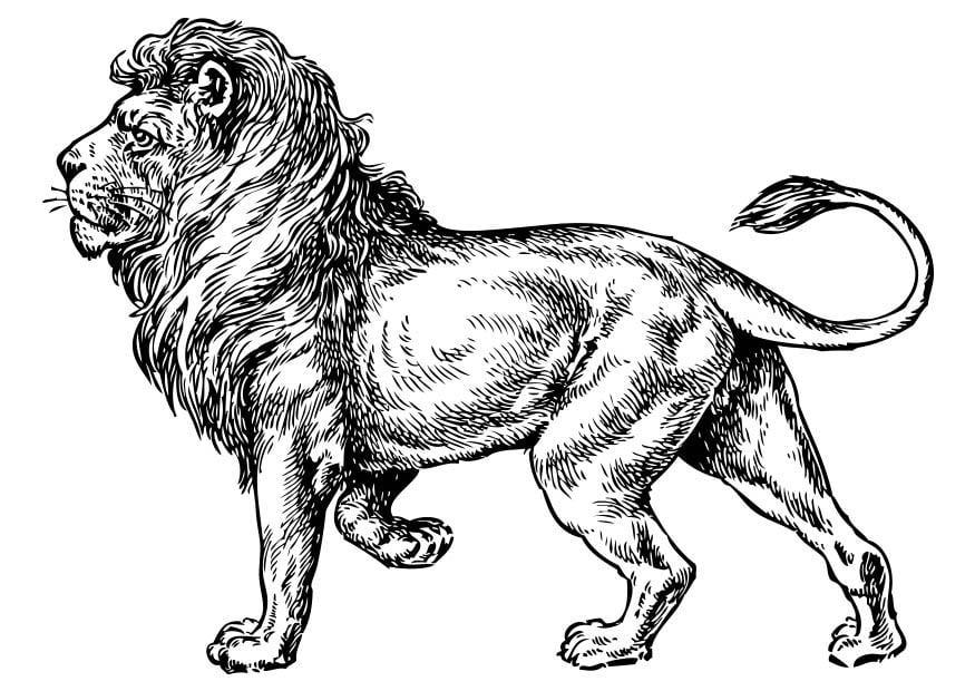 Coloriage Lion Img 17373 Images