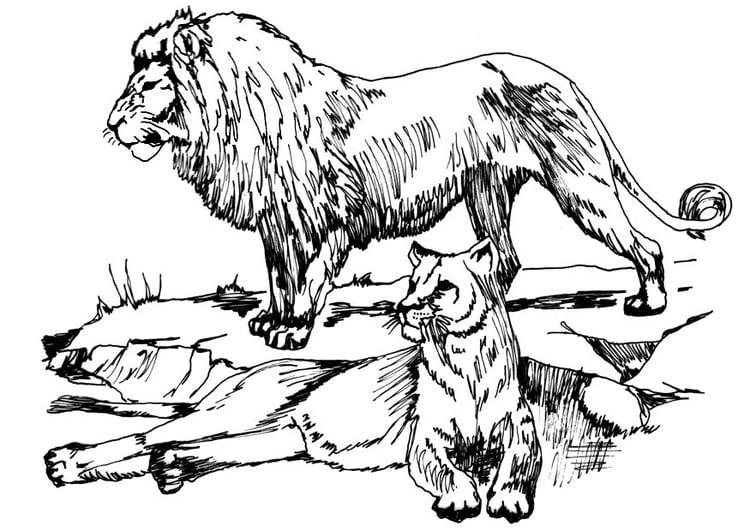Coloriage lion et lionne img 16633 - Lionne dessin ...