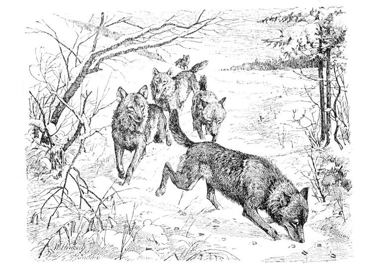 Coloriage Loup Dans La Foret.Coloriage Loups Img 9760