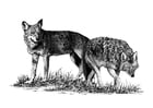 Coloriage loups