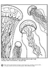 Coloriage méduses