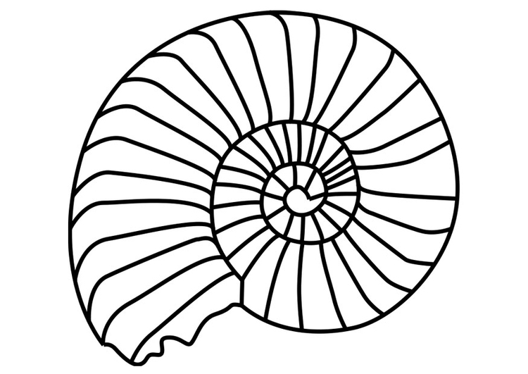 Coloriage mollusque ammonite