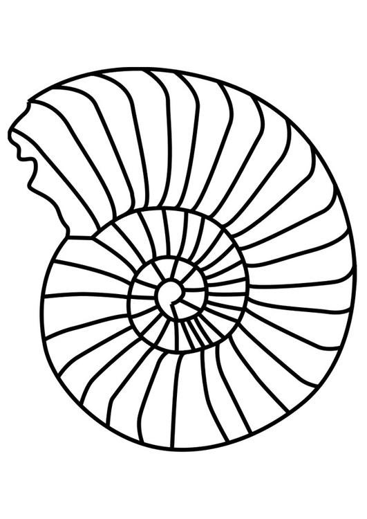 Coloriage Mollusque Ammonite Img 27190