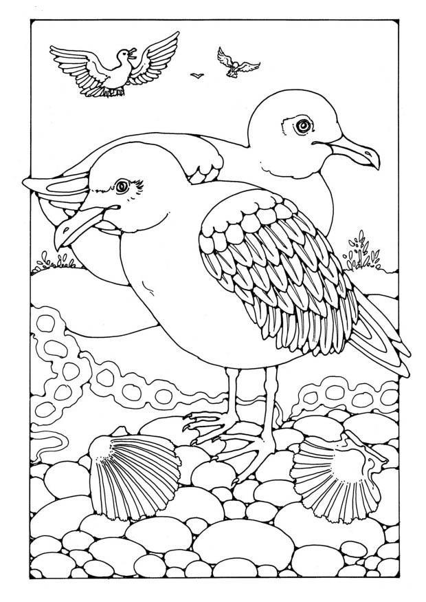 Coloriage mouettes img 19587 - Dessins de mouettes ...
