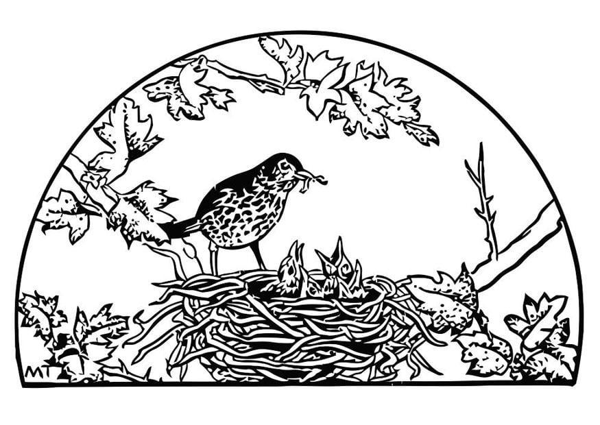 Coloriage Nid D Oiseau Coloriages Gratuits A Imprimer Dessin 19453