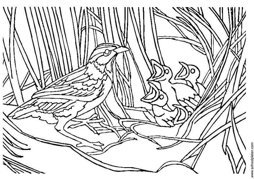 coloriage nid d'oiseau  coloriages gratuits à imprimer