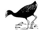Coloriage oiseau - poule sultane
