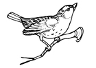 Coloriage oiseau sur une branche