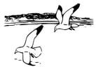 Coloriage oiseaux - goélands argentés