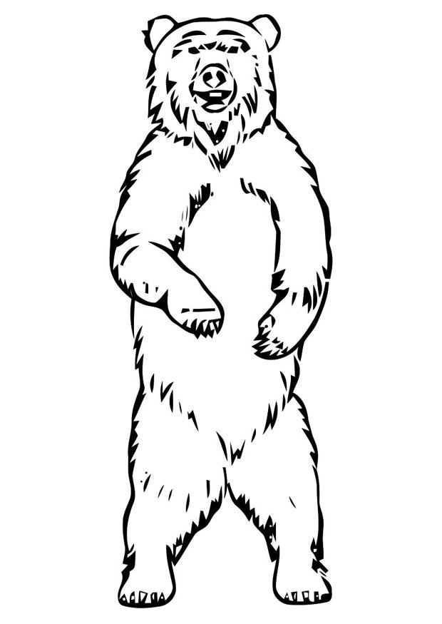 Coloriage ours img 19400 - Dessin de grizzly ...