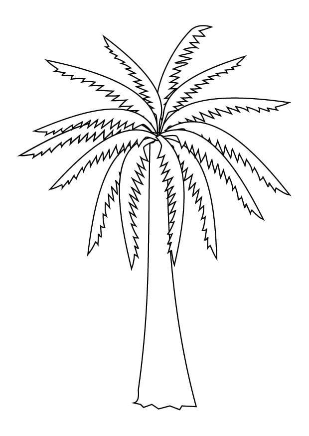 Coloriage palmier img 9879 - Dessin de palmier ...
