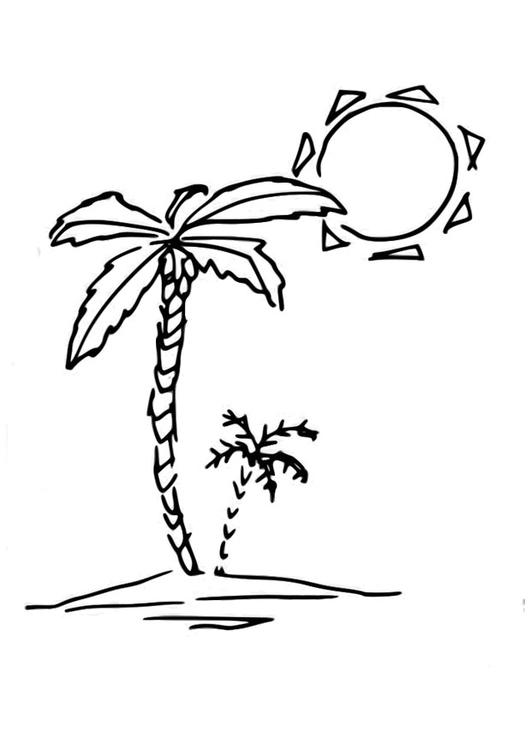 Palmbomen Kleurplaat Coloriage Palmier Coloriages Gratuits 224 Imprimer