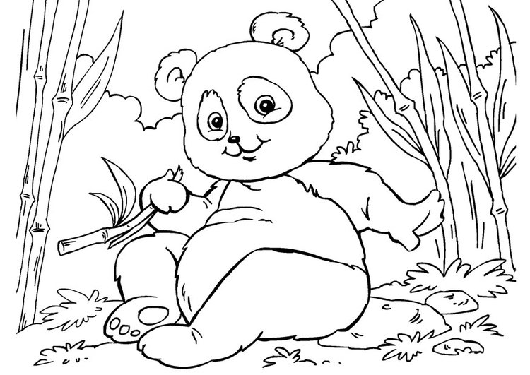 Coloriage panda img 27859 images - Coloriage petit panda ...
