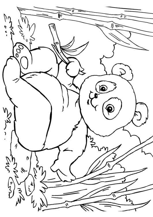 Coloriage panda img 27859 - Panda pour coloriage ...