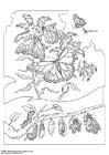 Coloriage Papillon monarque