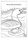 Coloriage parc naturel des canards