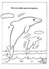 parc naturel des dauphins