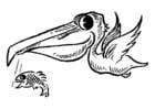 Coloriage pélican avec poisson