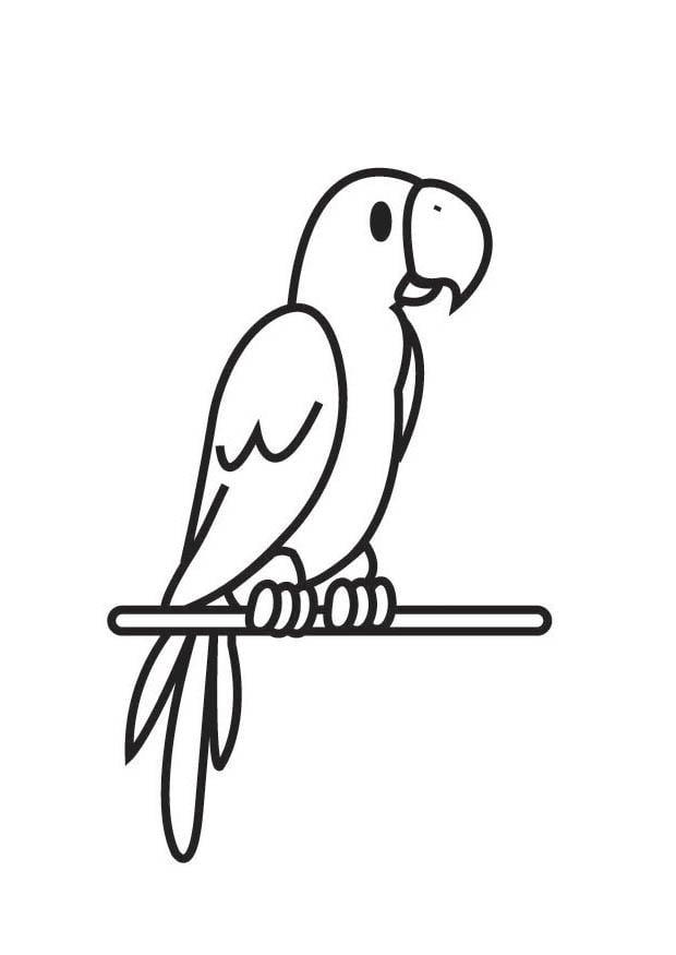 Coloriage perroquet img 18004 - Perroquet en dessin ...
