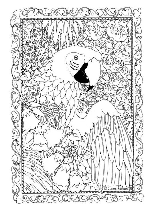 Coloriage perroquet img 19582 - Coloriage de perroquet ...