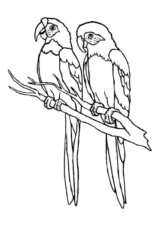 Coloriage perroquets img 12536 images - Coloriage de perroquet ...