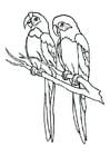 Coloriage perroquets
